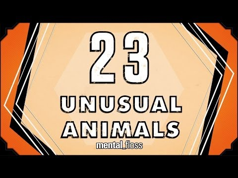 23 Unusual Animals - mental_floss on YouTube (Ep. 31)