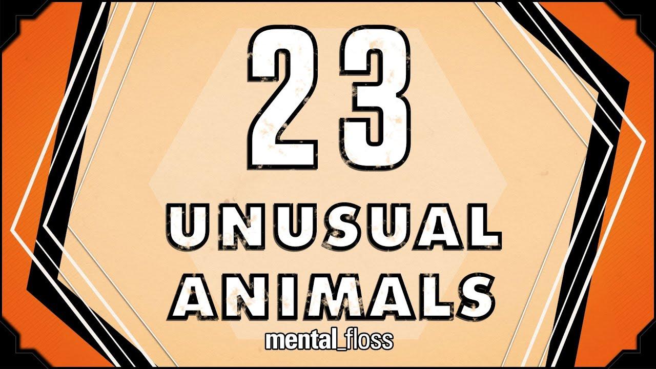 необычных животных с названиями