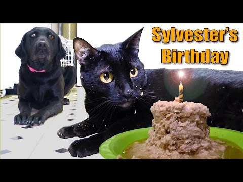 Thumbnail: Talking Kitty Cat 35 - Sylvester's Birthday 2014