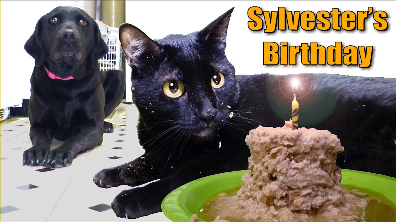 Happy Birthday Sylvester Cake