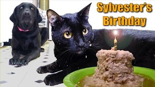 talking kitty cat 35 sylvester s birthday 2014