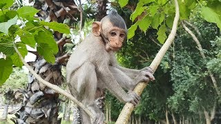 Very cute baby monkeys Bella and Berry lovely feeding moments, adorable baby animals videos