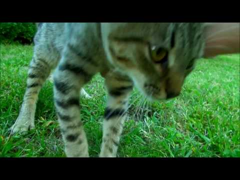 Real-life Cat Experience, a lovely small feral stray kitty wants attention