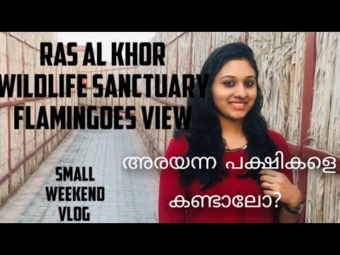 Ras Al khor wildlife sanctuary Dubai|Excellent view of Flamingoes| Weekend short vlog  malayalam |