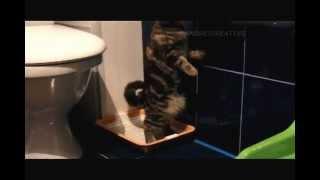 Кошка какает стоя ( Cat pooping standing )