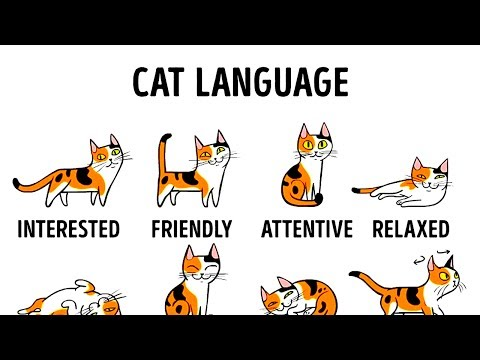 Thumbnail: HOW TO UNDERSTAND YOUR CAT BETTER