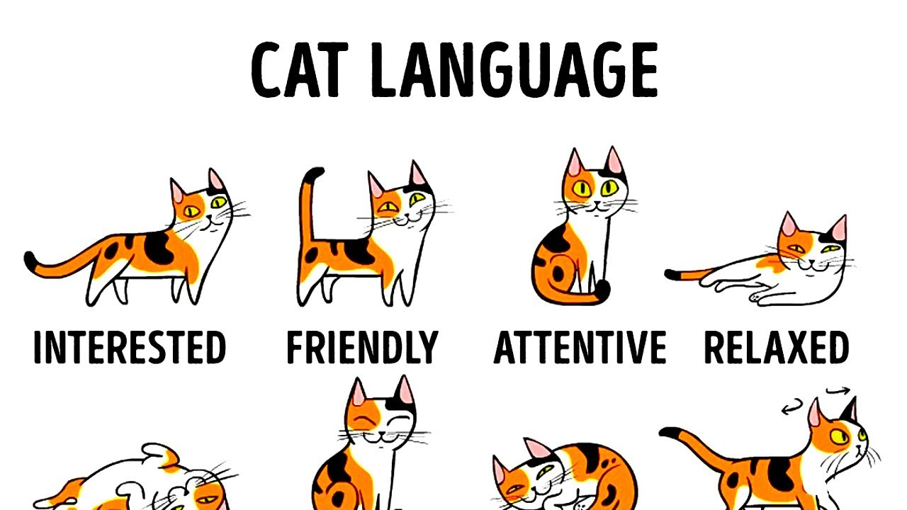 HOW TO UNDERSTAND YOUR CAT BETTER #1