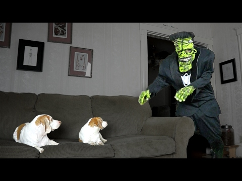 Dogs Love Frankenstein Prank: Cute Dogs Maymo & Penny