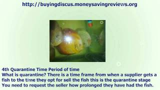 Prior to You Buy Discus Fish -  six Simple Tips You'll Require To Know(six Simple Tips You'll Require To Know. Visit the site for more info. http://buyingdiscus.moneysavingreviews.org., 2011-07-27T13:51:25.000Z)