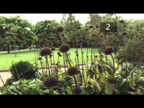 How To Prune Herbaceous Plants in Autumn