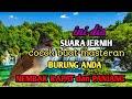 Masteran Cucak Jenggot Gacor Kasar Dan Jernih  Mp3 - Mp4 Download