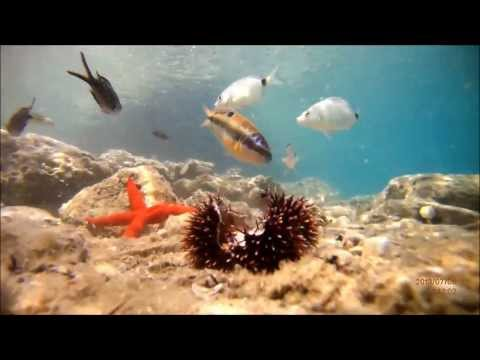 Mediterranean - Greece Sea Life!! HD