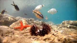 Mediterranean - Greece Sea Life!! - Drift HD /1080p