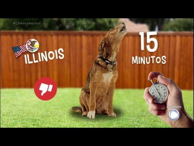Lei nos EUA limita latido de cachorro até 15 minutos