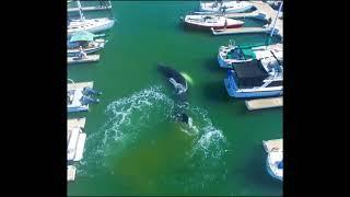 Огромный кит в маленьком порту. Красивое зрелище!