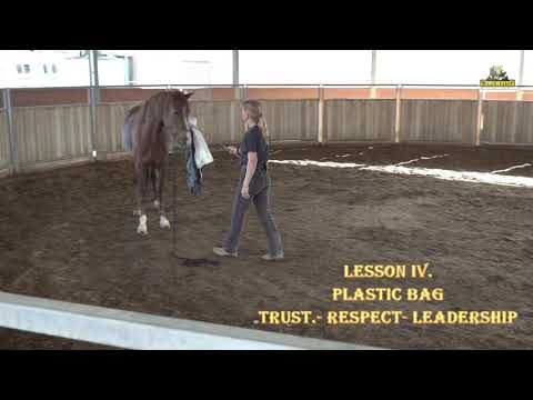 Leadership  for Missouri Foxtrotter Mare 7 Years Old