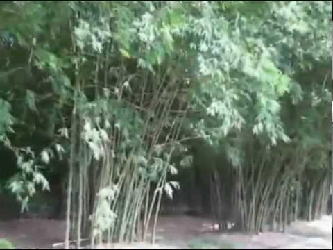 Làng Tre Phú An, Vùng Tam Giác Sắt, Bình Dương