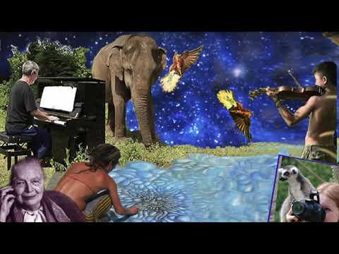 Artists United For Animals - Puntata Del 29 Maggio 2020
