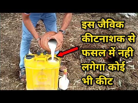 सरल तरीके से छाछ से जैविक कीटनाशक बनाना | How to Make Organic Pesticides