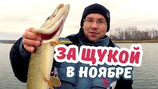 По осени ЗДЕСЬ ЛОВЯТ ЩУК МОНСТРОВ. Рыбалка на слиянии Суры и Волги