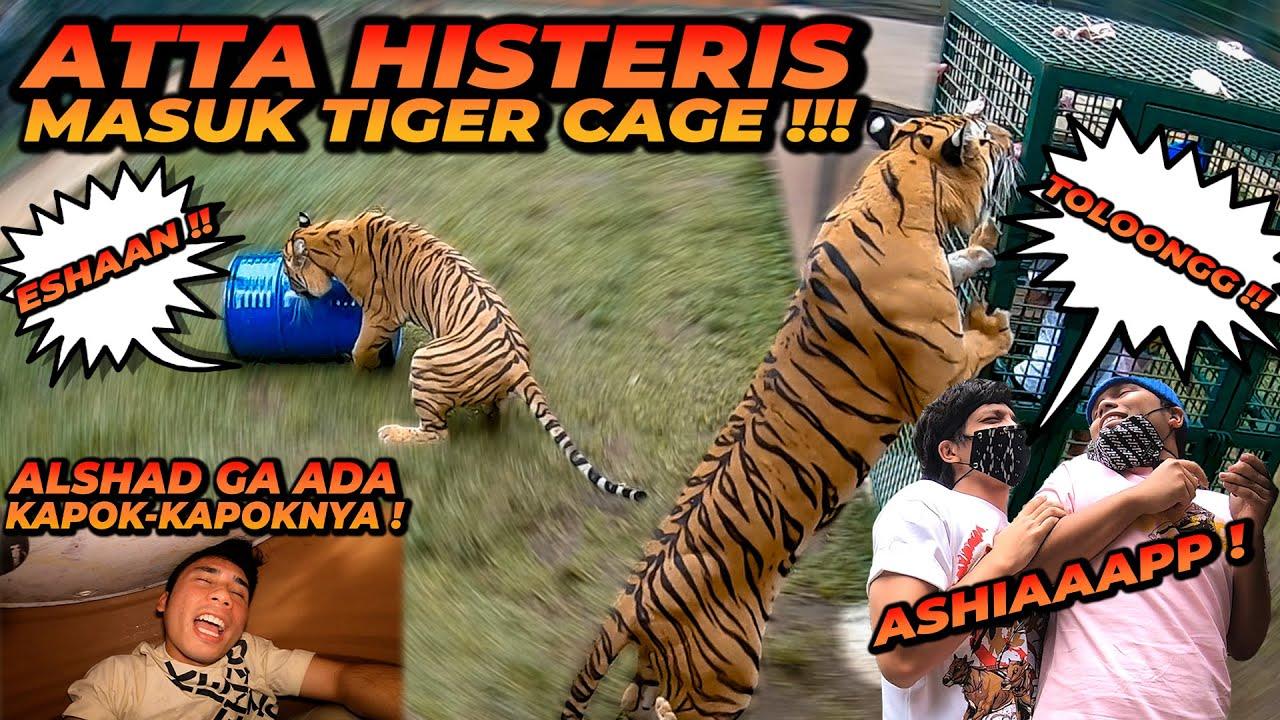 ATTA HALILINTAR DAN THARIQ MASUK TIGER CAGE !! ALSHAD GA ADA KAPOK NYA MASUK GENTONG !!