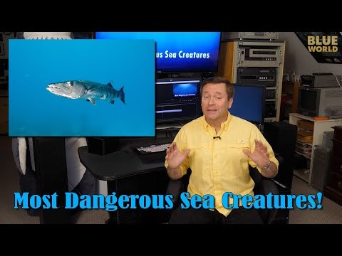 Most Dangerous Sea Creatures! | BLUE WORLD ACADEMY