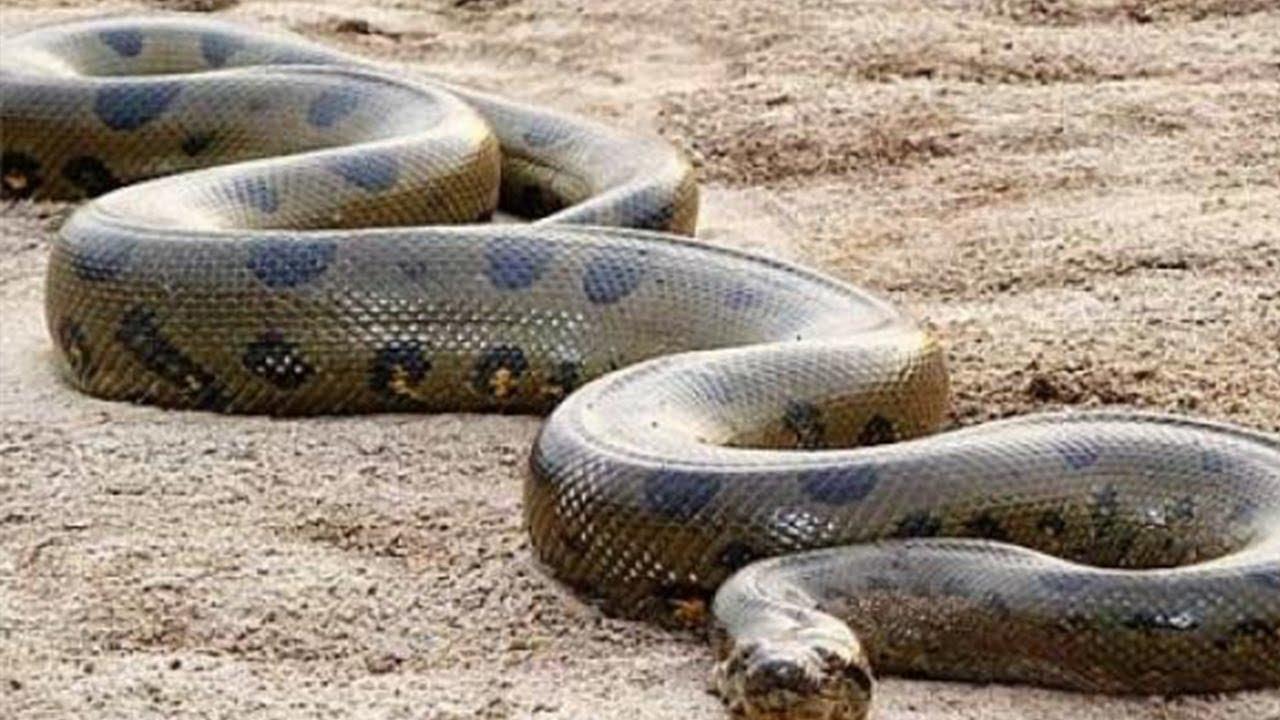 هل تعلم لماذا نهانا الرسول ﷺعن قتل الافاعى والثعابين فى البيوت قبل انذارها؟ مفاجأة ستذهلك