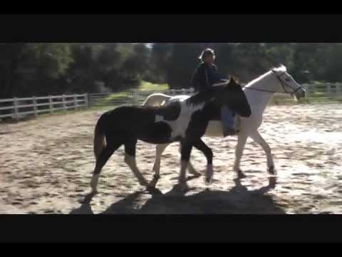 Terske Ponying Andy