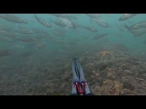 Spearfishing In Poole Harbour