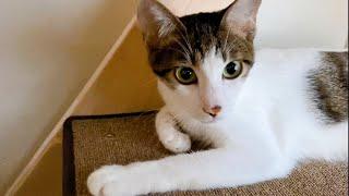 건강한 고양이에게 응급 과호흡 증상..걱정과 긴장으로 밤을 새웠습니다