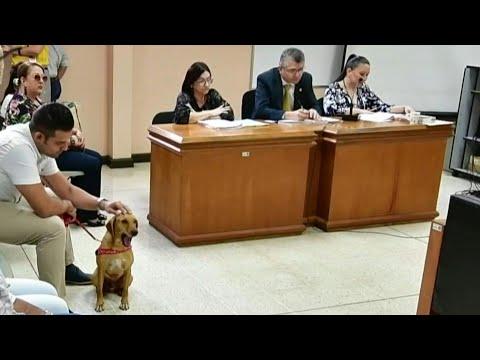 Costa Rica : victime de maltraitance, un chien assiste au procès de son bourreau