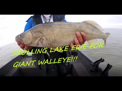 Lake Erie Walleye Trolling
