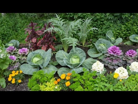 Соседство овощей на грядке, что с чем садить, правильное сочетание овощей и зелени, подбор культур