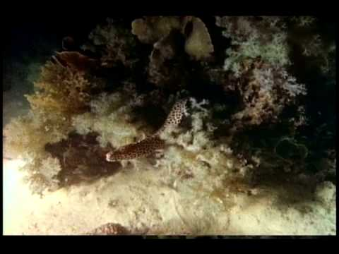Sea Snakes of the Swains
