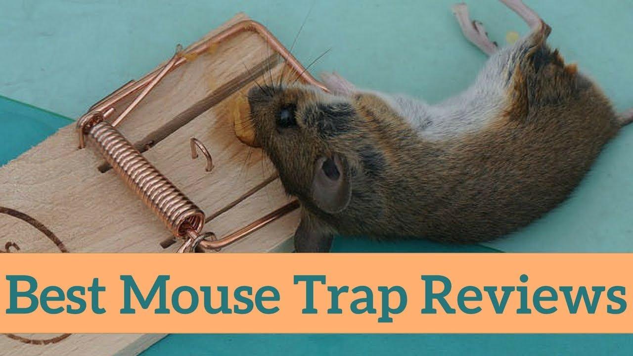 top 10 best mouse traps that works for home kitchen garage youtube. Black Bedroom Furniture Sets. Home Design Ideas