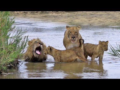 Lion Family-Fun-Day at the Beach