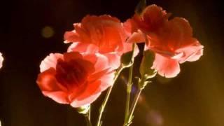 楽譜は 椎名林檎さんの「カーネーション」と同じく下記で購入しました。...