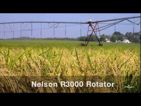 Growing corn with nelson irrigation 39 s white plate rotat for Irrigatori nelson