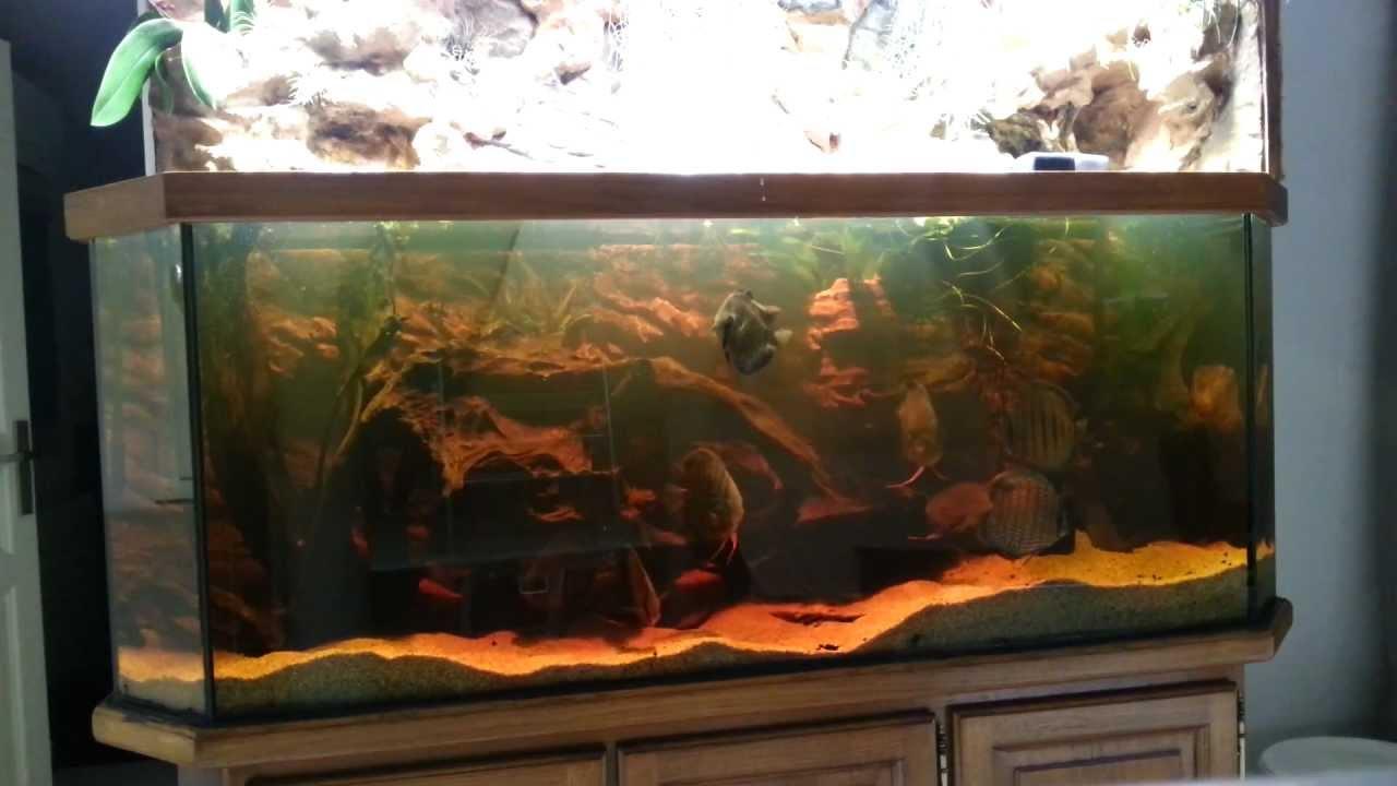 Decor Resine Aquarium