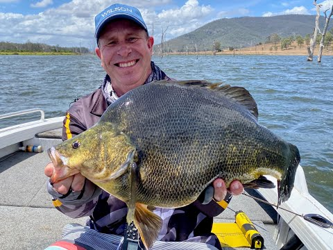 PTP Fishing - PB Golden Perch Somerset Dam