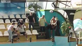 Liveleak Russian Oceanarium Brawl.mp4