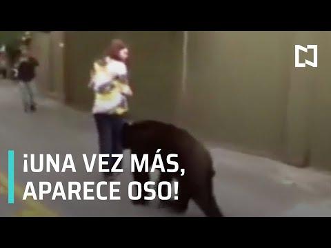 Polémica por futuro del oso que se acercó a mujeres a Nuevo León - Paralelo 23
