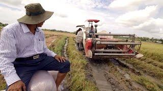 dev.TV: Rice Harvester in Vietnam