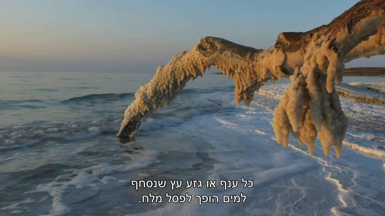 ישראל הפראית - פרק 2 - חיים סביב ים המוות
