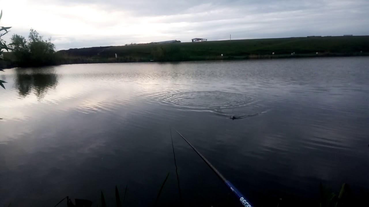 Reteta de mamaliga, pentru pescuitul la undita pe Lacul Boteni 1, cu patratica sau cu cocolos