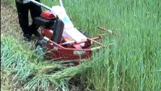 Cow Feed Grass Cutter