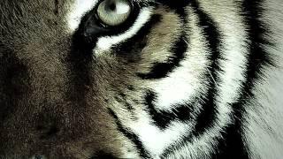 [01] เสือ - (ฮันนี่) ภัสสร บุณยเกียรติ