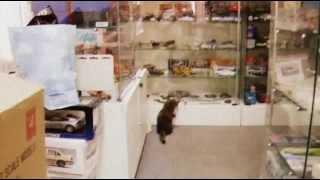 Котенок в магазине машинок пытается открыть витрину