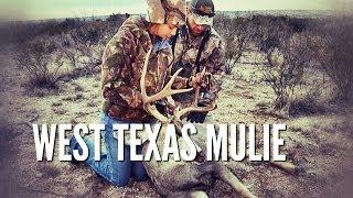 Matti's West Texas Mulie