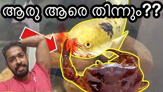 ഞണ്ട് വാരലിനെ തിന്നുവോ? ?| Crab VS snakehead😱 | Kerala Fishing